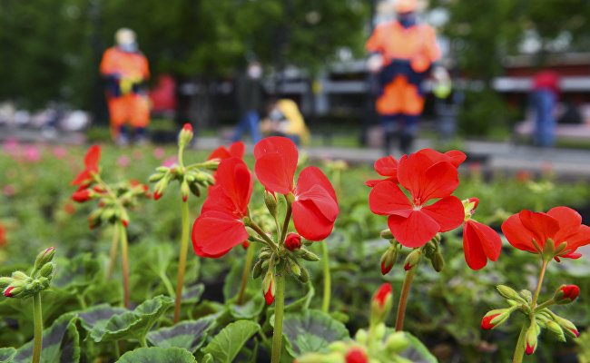 Almost 500,000 flowers will decorate St. Petersburg by UEFA Euro 2020