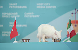 ACHILLES THE CAT'S PREDICTION AHEAD OF THE OPENING MATCH OF THE UEFA EUROPEAN FOOTBALL CHAMPIONSHIP, TURKEY VS. ITALY
